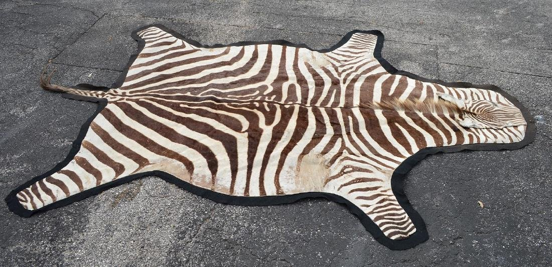 Zebra Skin Rug 9' x 5'.  Condition: good with minor