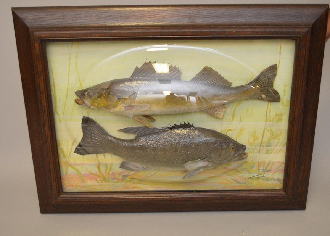 "Framed Fish Taxidermy ""Franck Schwartz Studio,1936, - 7"