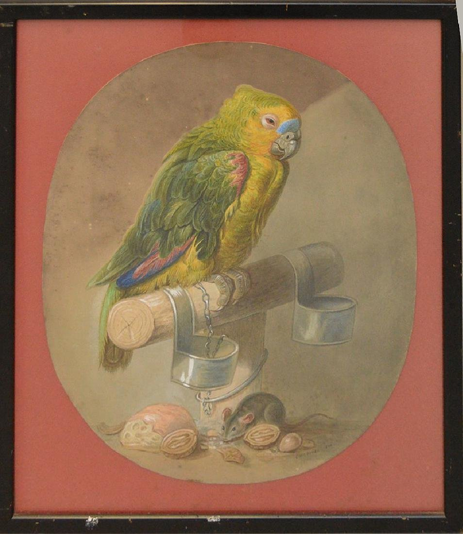 Watercolor of Parrot, signed Pordoner 1870, 18 x 14