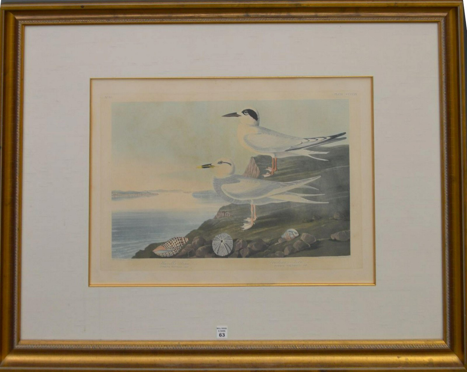 AUDUBON ORIGINAL ENGRAVING  John James Audubon