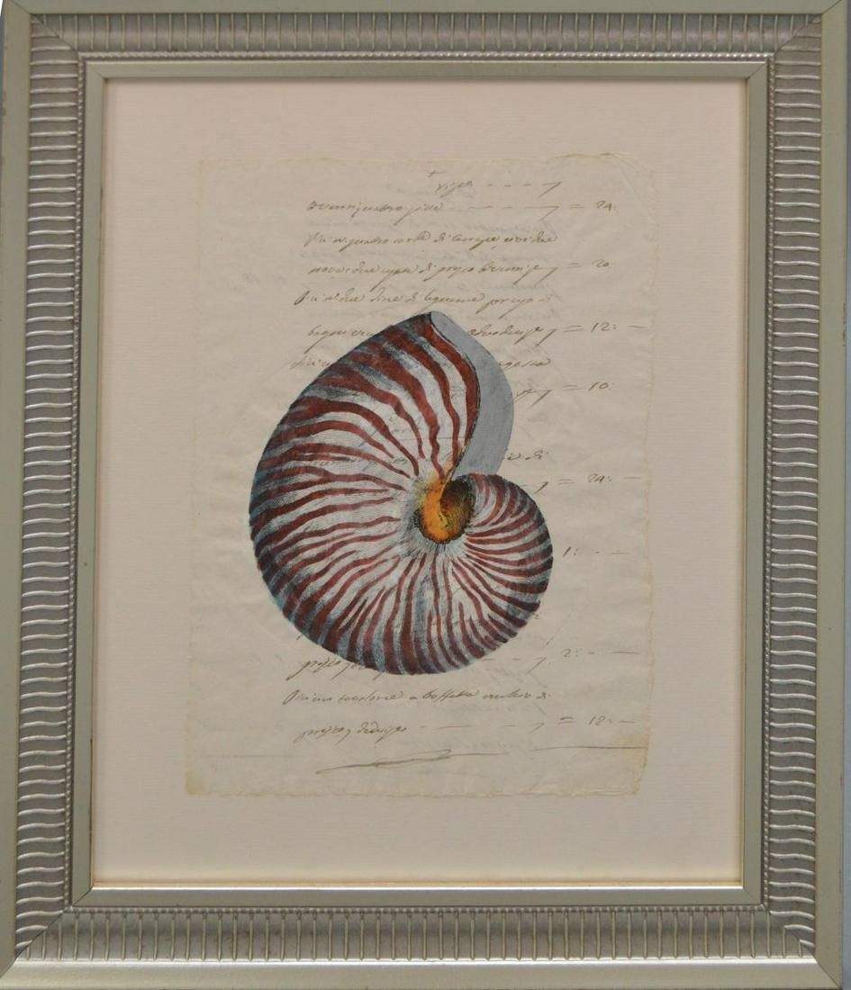 Hand Colored Engraving of a Nautilus Shell on 18th