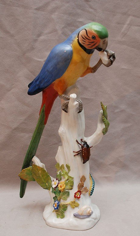 24: Meissen parrot on trunk with insects on tree trunk,