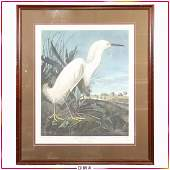 R Havell, Audubon Snowy Heron / White Eagle #135/1500