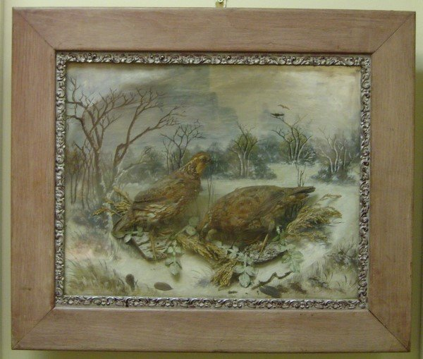 3021: 19TH C. SHADOWBOX DIORAMA QUAIL WITH OIL PAINTED