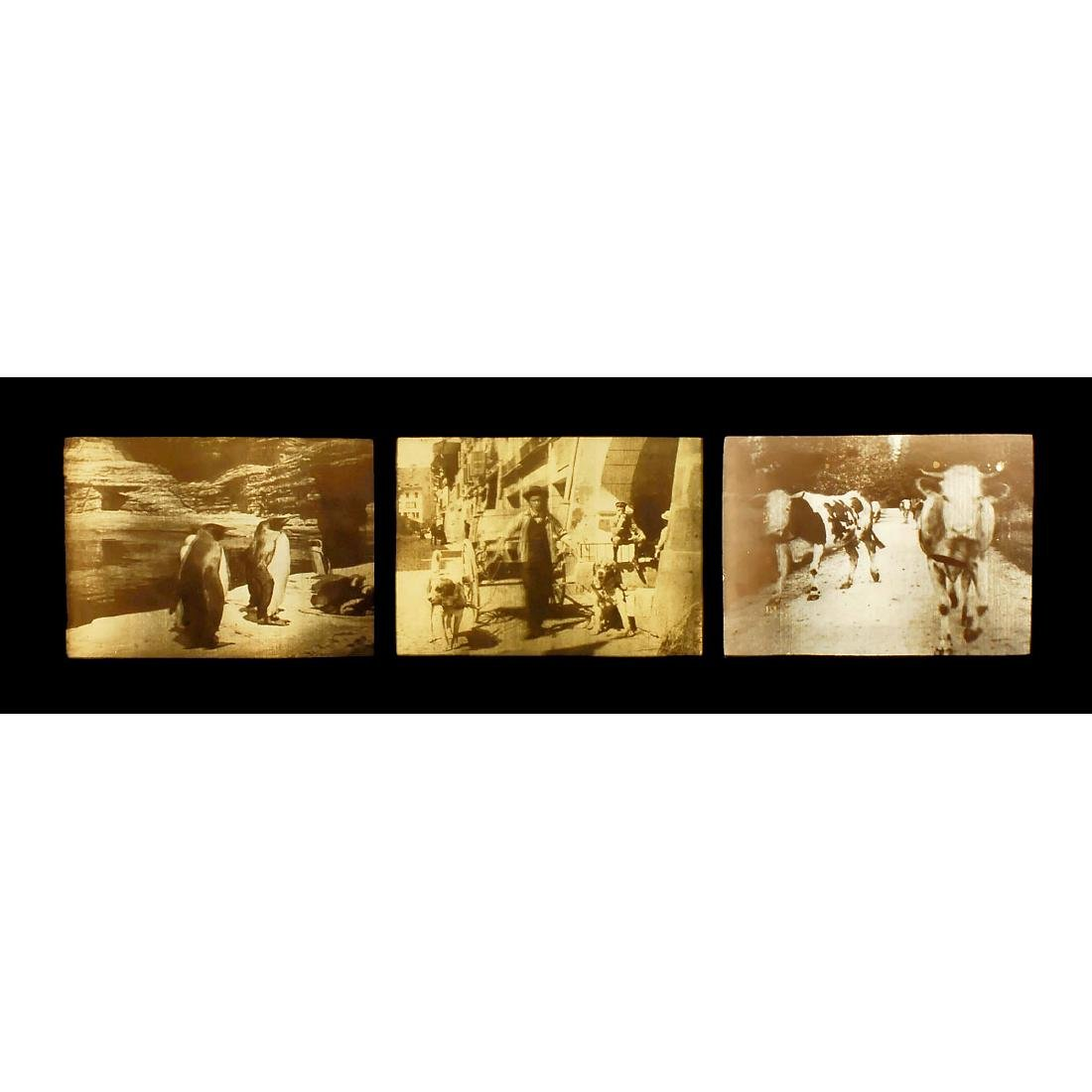 3 x 3D Lenticular Picture by W.R. Hess, c. 1912