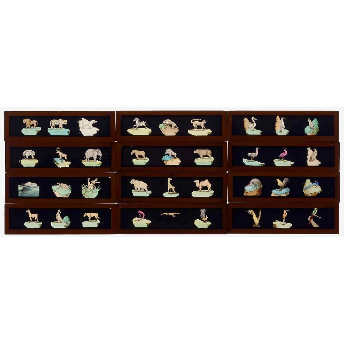 12 Magic Lantern Slides: Birds, Land and Sea Animals,