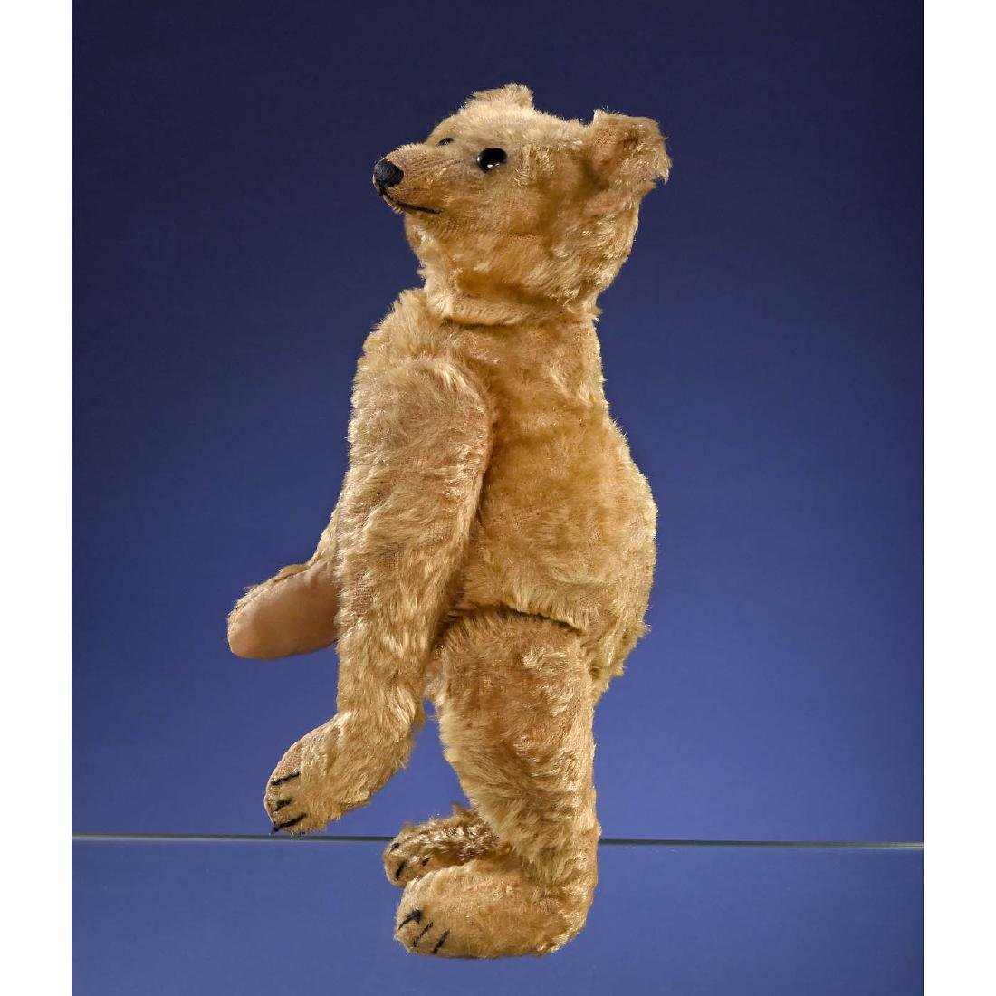 Rare Steiff PB28 Rod Bear, c. 1903/1904 - 6