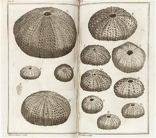 KLEIN, Jakob Theodor (1685-1759) - Ordre naturel des
