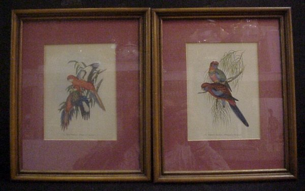 3005A: Pair of framed parrot prints, early 20th c, fram