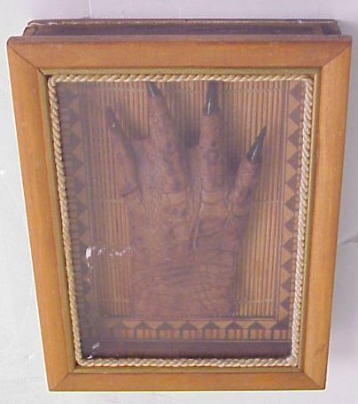 """2001: Framed taxidermy reptile claw, 7 3/4"""" x 6"""""""