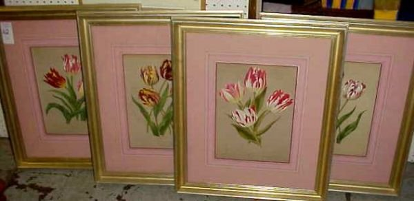 "12: FOUR TULIP BOTANICAL PRINTS, LATE 19THC, 13 3/4"" X"