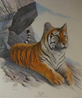 Siberian tiger by Ron Jenkins