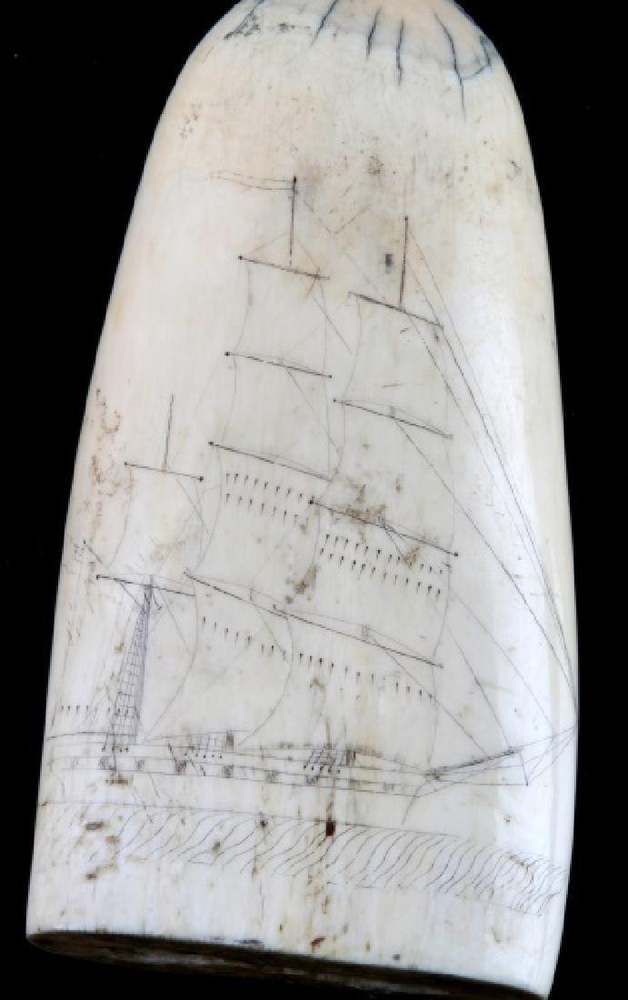 ANTIQUE 19TH CENT. WHALE SCRIMSHAW EROTICA & SHIP - 4