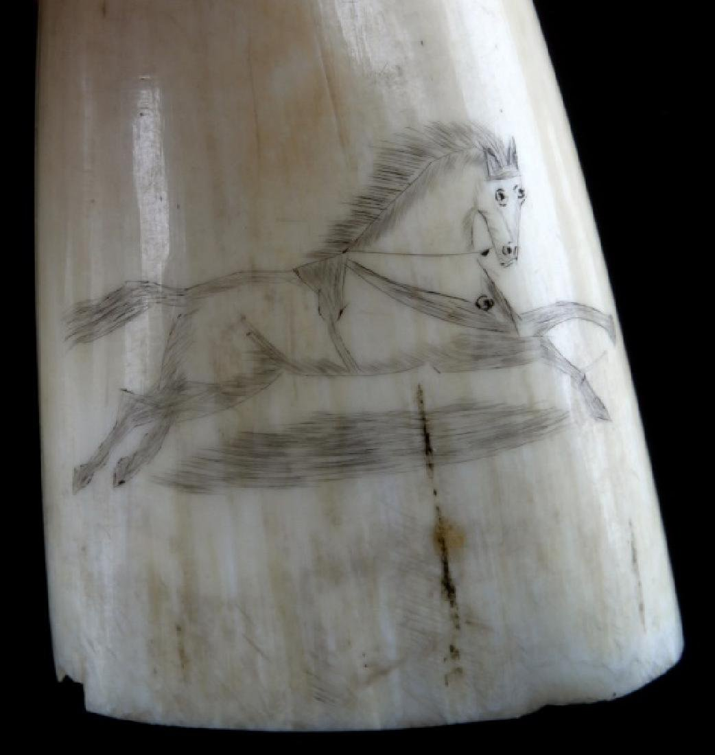 SCRIMSHAW SPERM WHALE TOOTH GALLOPING HORSE - 2