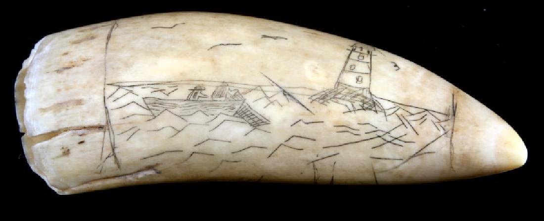 SCRIMSHAW SPERM WHALE TOOTH DATED 1876
