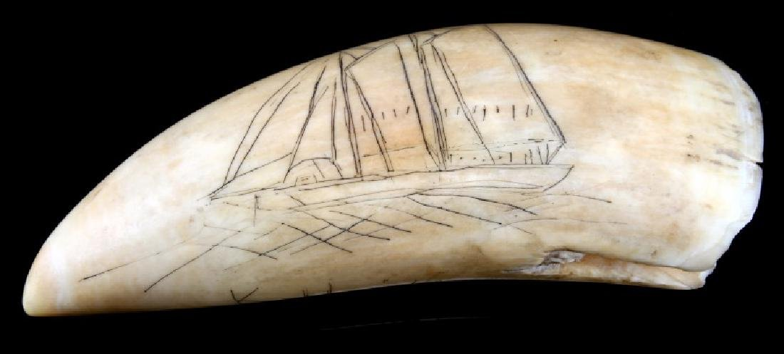 SCRIMSHAW SPERM WHALE TOOTH DATED 1876 - 2