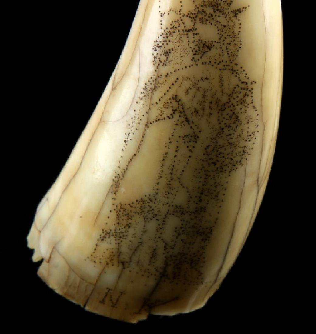 ANTIQUE 19TH CENTURY WHALE TOOTH SCRIMSHAW LIBERTY - 4