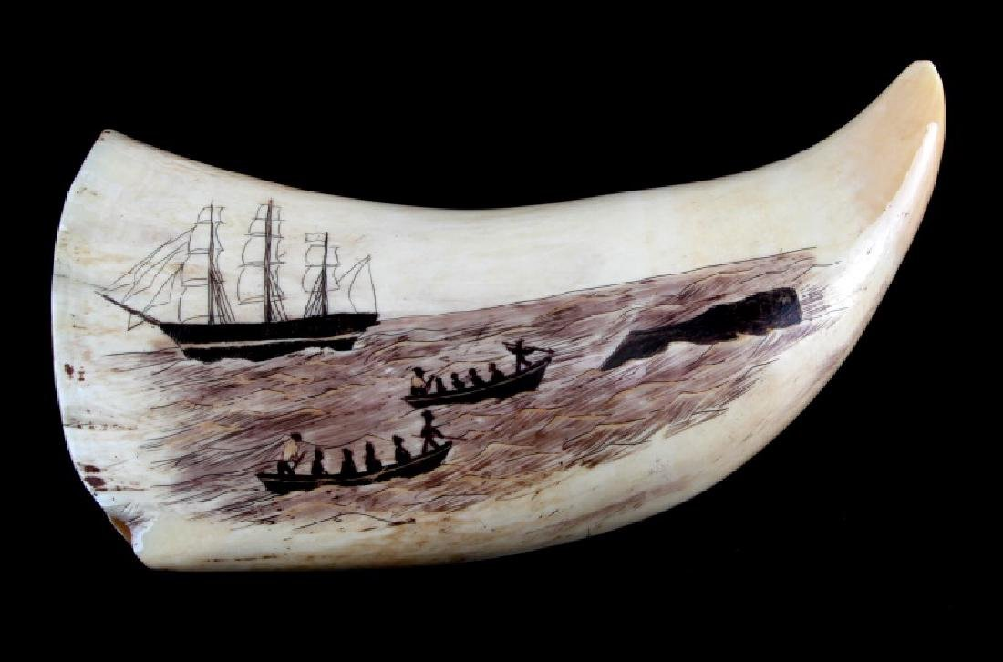 ANTIQUE WHALE TOOTH SCRIMSHAW OCTOPUS - 3