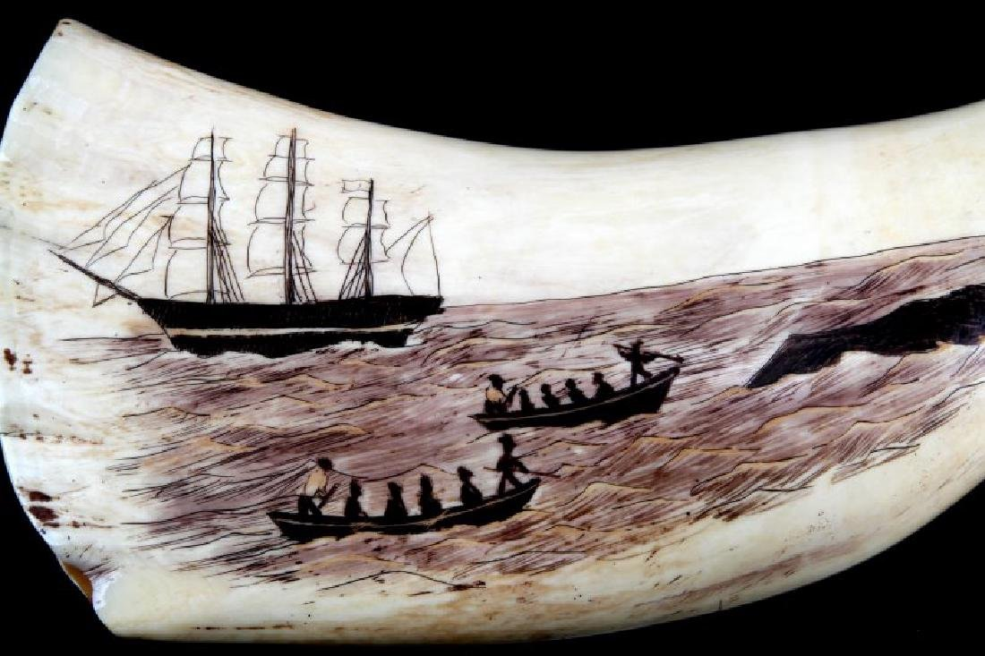 ANTIQUE WHALE TOOTH SCRIMSHAW OCTOPUS - 4