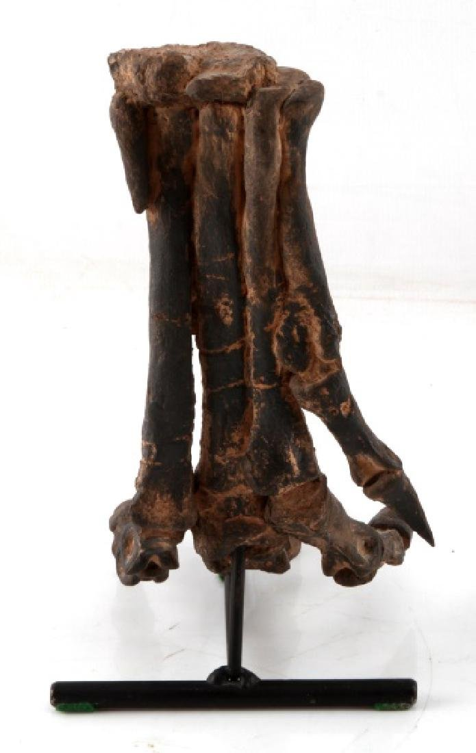 RESIN REPLICA DINOSAUR OTHNIELIA HIND FOOT - 5