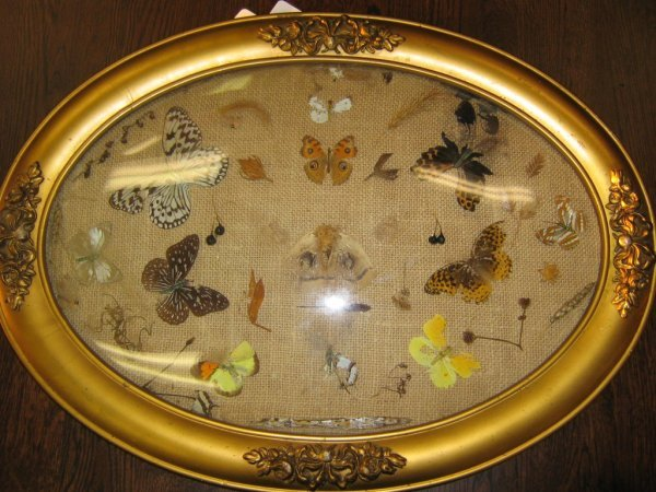 ANTIQUE CONVEX BUBBLE GLASS FRAMED BUTTERFLY SCENE