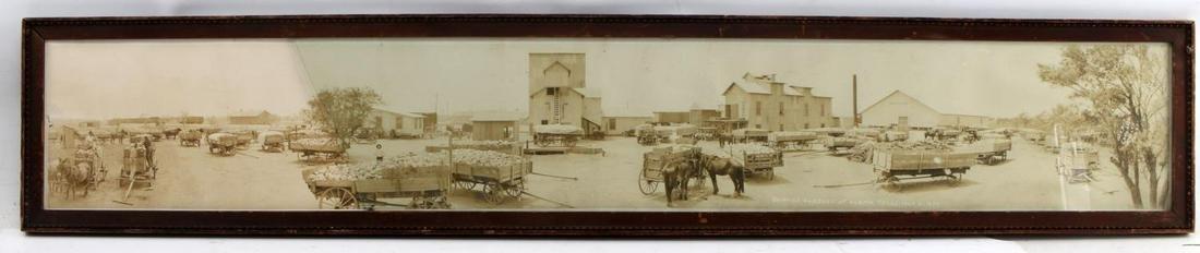YARD LONG FRAMED PHOTOGRAPH OF CABBAGE ALAMO TX