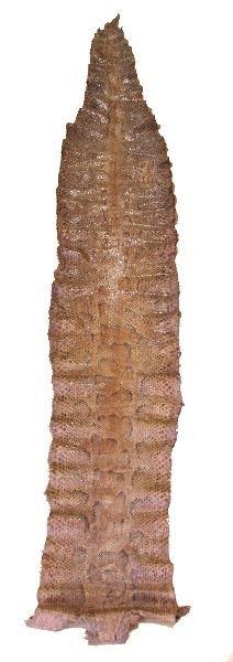 5006: HUGE 15 FOOT TAXIDERMY PYTHON SNAKE SKIN