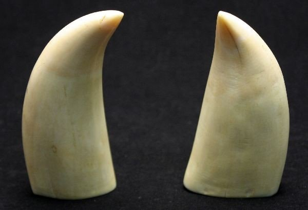 COLLECTION OF TWO WALRUS TEETH