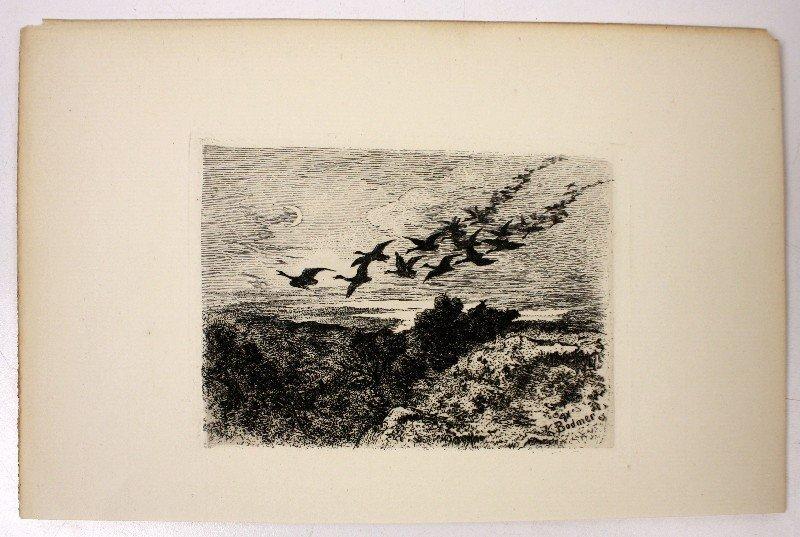 KARL BODMER 1830?S ENGRAVING OF BIRDS IN FLIGHT
