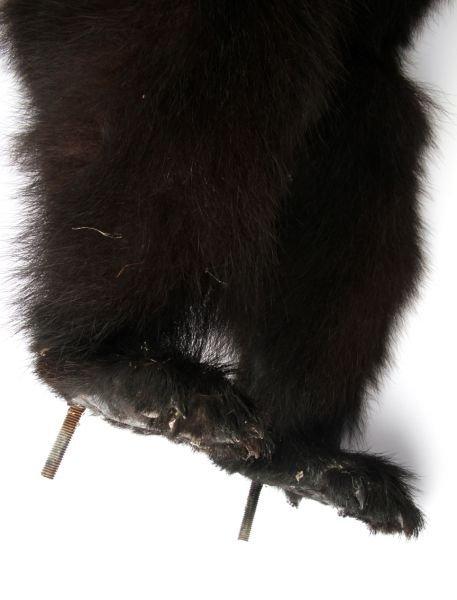 VINTAGE FULL SMALL TAXIDERMY MONTANA BLACK BEAR - 9