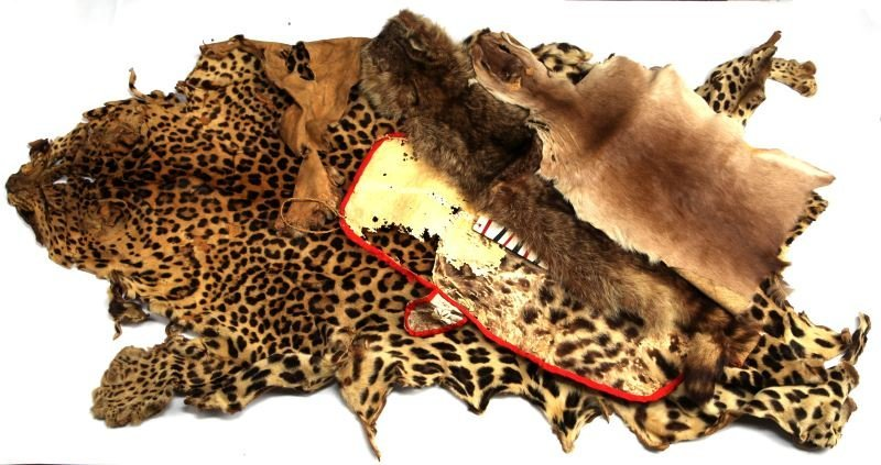 GROUP OF 1930'S ERA AFRICAN SKINS LEOPARD OTHERS
