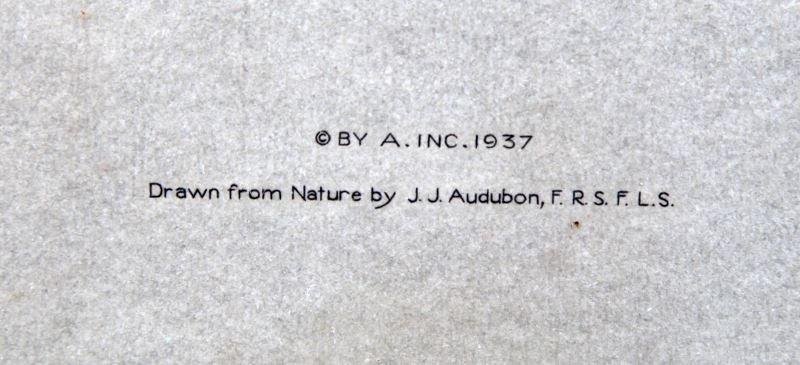 1937 PRINT J.J. AUDUBON OF BOAT TAILED GRACKLE - 3
