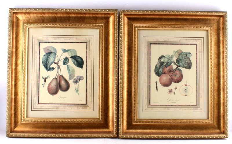 2 QUALITY FRAMED DECORATOR BOTANY PRINTS