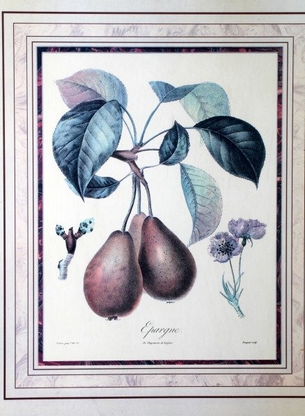 2 QUALITY FRAMED DECORATOR BOTANY PRINTS - 2