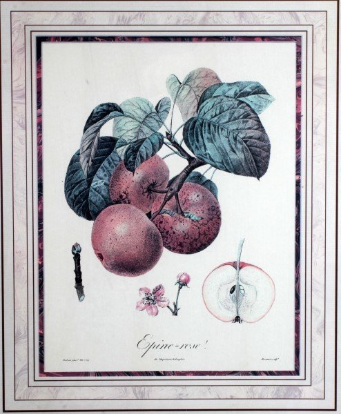 2 QUALITY FRAMED DECORATOR BOTANY PRINTS - 3