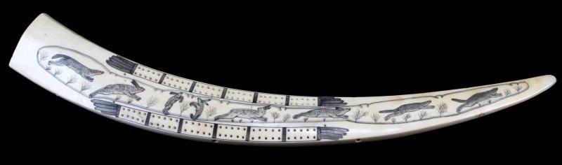 ANTIQUE WALRUS TUSK SCRIMSHAW CRIBBAGE BOARD