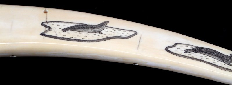 ANTIQUE WALRUS TUSK SCRIMSHAW CRIBBAGE BOARD - 6
