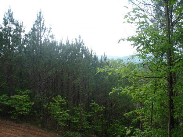 72201: Land 129.42 Acres Ellijay Georgia Burnt Mountain