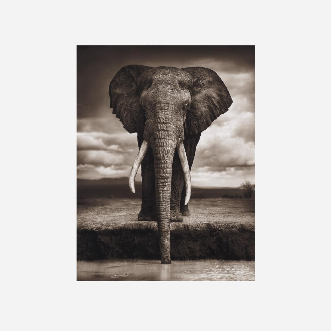 Nick Brandt, Elephant Drinking, Amboseli