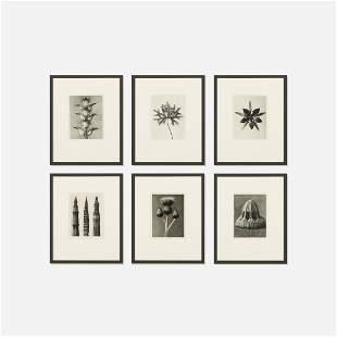 Karl Blossfeldt, six works from Wundergarten der Natur