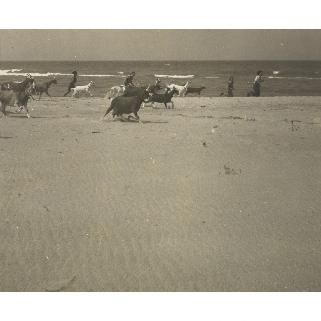 120: Anonymous untitled (goats on the beach)