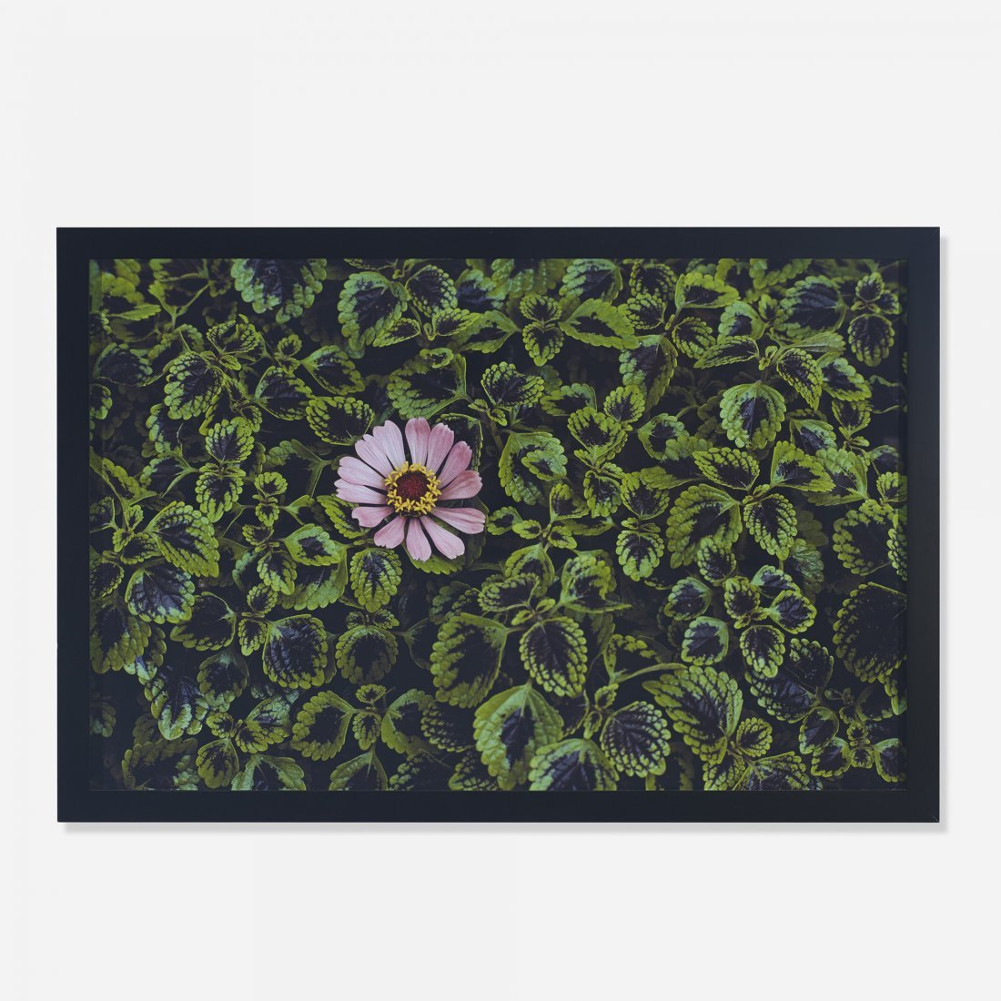 Steve McCurry Monsoon Flower
