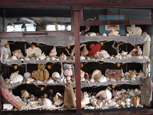 141A: Antique Sea Shell Collection including literally