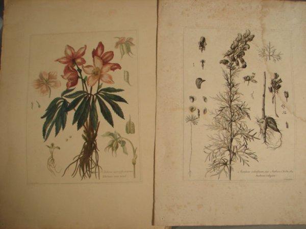 3010: Two N. Robert Botanical Prints