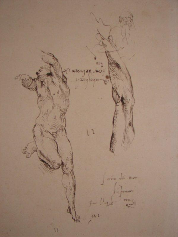 3011: Michel Ange Anatomy Study Print. After Michel Ang