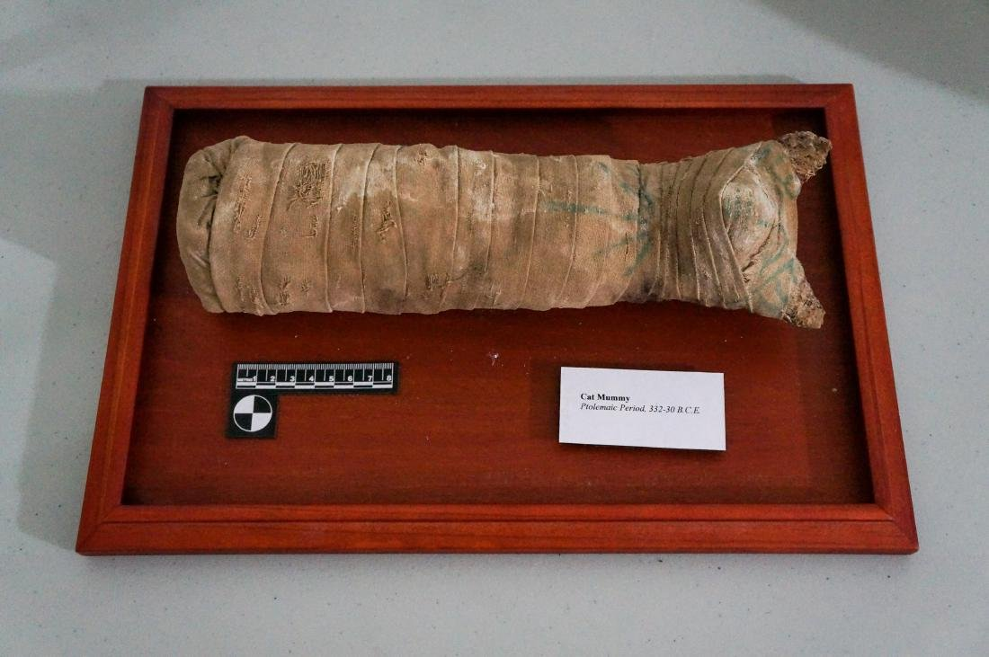 ANCIENT EGYPTIAN PTOLEMAIC PERIOD CAT MUMMY