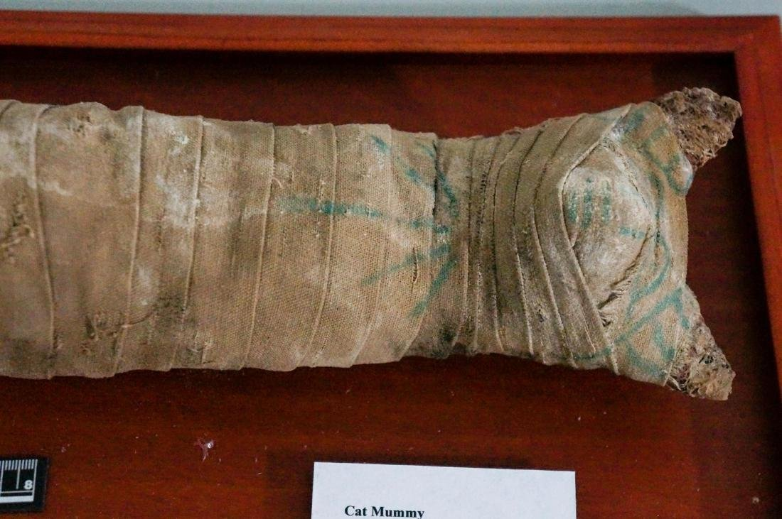 ANCIENT EGYPTIAN PTOLEMAIC PERIOD CAT MUMMY - 2