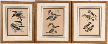 Three Hand Colored Ornithological Prints