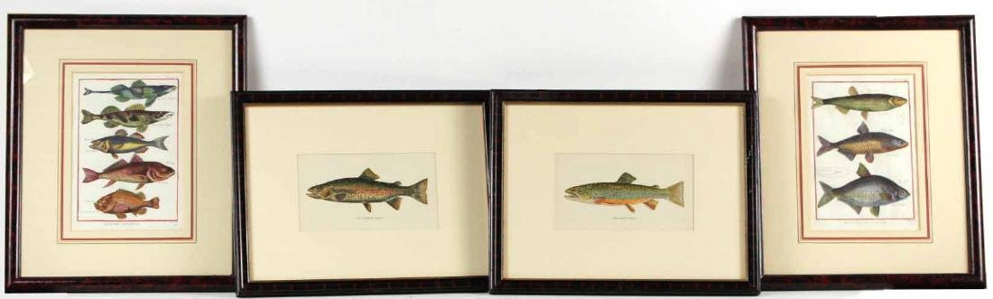 Two French Colored Fish Engravings