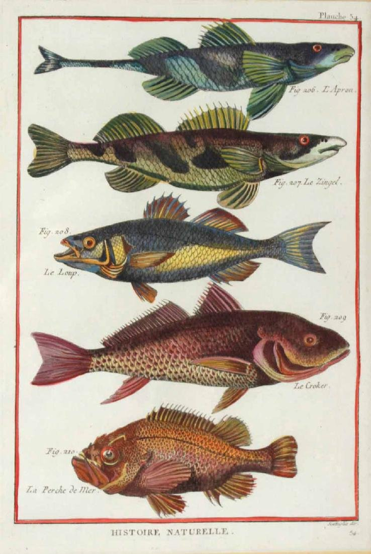 Two French Colored Fish Engravings - 2
